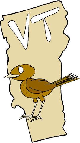 VT Backyard Birding